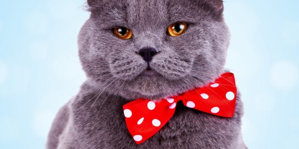How to Get A Fat Cat To Buy Your Small Business