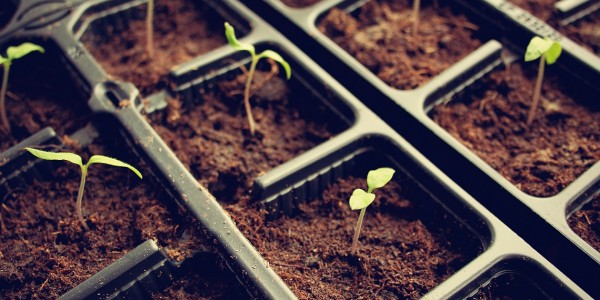 When Organic Growth Stalls, Consider Mergers and Acquisitions