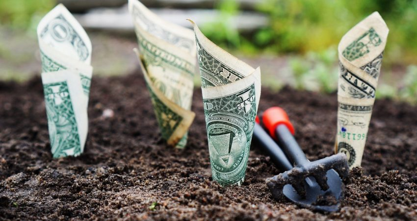 Got Cash How Successful Organizations Accelerate Short and Long Term Growth
